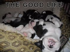 3 Weeks Old Puppies Doing a Good Life