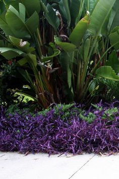 The Rainforest Garden: Tropical Color in the Summer Garden