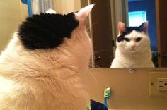 21 Cats Psyching Themselves Up For Thanksgiving.