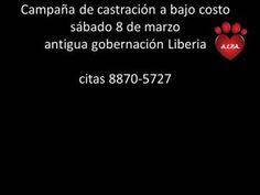 Castracion de perros y gatoshttp://www.desktopcostarica.com/eventos/2014/castracion-de-perros-y-gatos