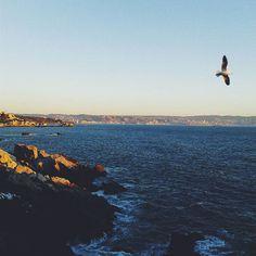 SeascapePaisaje marino❤  .  .  .  #vscocam #vsco #vscocool #vscochile #seascape #sea_mer_mar #sea_love #sea #shore #sea_sky_nature #cityscape #citybythesea #landscapelover #landscape_lovers #landscape_captures #myfeatureshoot #myheartinshots #shots_super_pics #shot_flair #shotzdelight #instachile