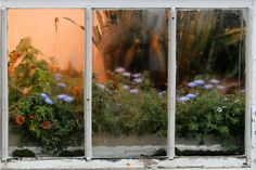 Window | Joel Rhymer