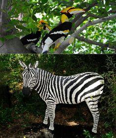 Bronx Zoo 'Zebra'