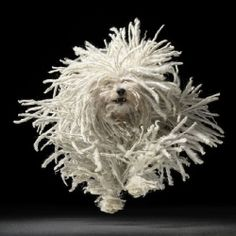 Amazing Dog Photos by Tim Flach. (in Spanish)