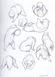 Bear Sketches2 by Dragon2524 on DeviantArt