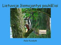 """StoryJumper book - """"Lietuvoje žiemojantys paukščiai""""."""