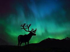 northern Alaska Northern Lights, See The Northern Lights, Beautiful Sky, Beautiful World, Beautiful Places, Hirsch Illustration, Northen Lights, Lappland, All Nature
