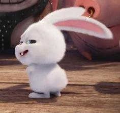 Shake shake shake shake shake shake Shake that weekend bunny booty, that bunny boo-tay! Snowball Rabbit, Pets Movie, Cute Bunny Cartoon, Cute Baby Bunnies, Secret Life Of Pets, Cute Doodles, Cute Cartoon Wallpapers, Cute Characters, Disney Wallpaper