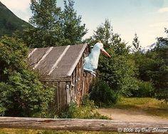 Dusty In Alaska: The Bird House Tavern