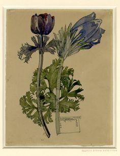 Mackintosh, Charles Rennie » Anemone and Pasque, Walberswick 1915
