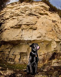 This is Pax. Hes a good boy. His master was learning about lighting today - at Rattlesnake Point.  #haltonparks #conservationhalton #haltonconservation #rattlesnakepoint #mec #mecstaffer #goodtimesoutside #dog #blacklab #mansbestfriend #pup #hike #crag #climbing #rocks #hiking #photohike #outdoorphotography #outdoors #rockface #offcameraflash #canoncanada #fisheye #flashphotography #canadianphotographer #torontophotographer #burlingtonphotographer #snapacenephoto  @conservationhalton… Flash Photography, Outdoor Photography, Off Camera Flash, Toronto Photographers, Mans Best Friend, Conservation, Good Times, Climbing, Pup