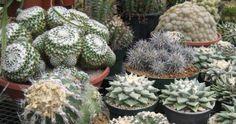 California Cactus Center   Atlas Obscura