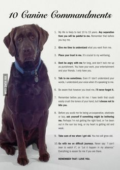 This made me feel so sad. It's true and much people doesn't treat their dog like they should be treated.