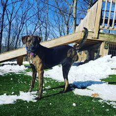 #rescuedog #tripoddog #stunning #internationaldog