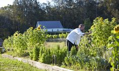48 hours in Pokolbin in the Hunter valley, NSW: where to eat and drink | Travel | The Guardian