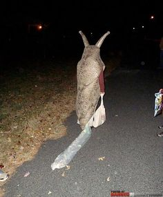Slug costume. hahaahahahha! Laughed so hard when I saw This... Love the'trail'