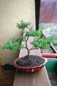 Bonsai to be - After | Flickr - Photo Sharing!