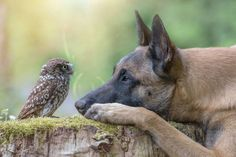 Owl and dog