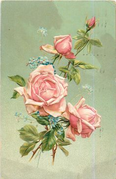 three pink roses & bud above