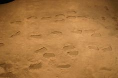 Footprints in the Reseau Clastres (Ariege, France). The archaeology suggests they were made by three children c.25,000 years ago.