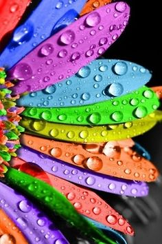 As colorful as you imagine