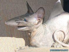 Shat. | 28 Unsettling Animal Mashups That Should Probably Never Have Happened