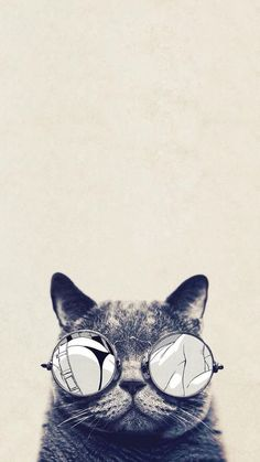 Cool Cat Glasses iPhone 6 Plus HD Wallpaper - Funny iPhone Wallpaper Gallery Cat Phone Wallpaper, Tier Wallpaper, Hipster Wallpaper, Wallpaper Keren, Animal Wallpaper, Cool Wallpaper, Mobile Wallpaper, Wallpaper Backgrounds, Glasses Wallpaper