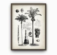 Palm Tree Botanical Art Print  Vintage Palm Tree by QuantumPrints