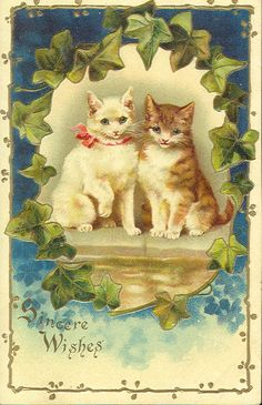 Vintage Cat Postcard 047