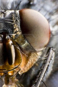 compound insect eye