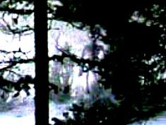 Konon dalam foto yang diabadikan pada tahun 2005 tersebut menunjukkan sesosok Alien yang agak tersembunyi di semak-semak. Ketika foto tersebut diperbesar memang muncul sesosok yang tampak seperti alien seperti di film-film. Karena kurang percaya dengan foto yang diberikan itu, situs tersebut dengan segera meminta sang pengirim foto untuk memberikan informasi yang lebih detail mengenai asal-usul foto tersebut. Dan kemudian sang pengirim foto itupun memberikan informasi lengkap mengenai foto…