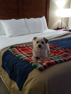 Jasper's first hotel stay. Hotel Stay, Puppy Love, Puppies, Cute, Cubs, Kawaii, First Love, Baby Dogs, Puppys