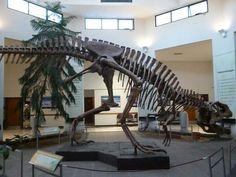 Squelette reconstruit d'un Tyrannotitan. Dinosaur Bones, Dinosaur Fossils, Reptiles, Mammals, Prehistoric Creatures, Sea Monsters, Extinct, Skeleton, Rocks