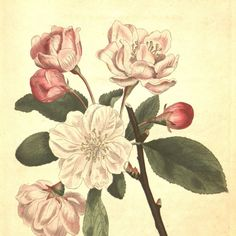 Nature art, Flower art, Vintage print, Nature, Botanical art, Flower print, Wall decor, 267