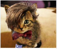 Bieber Kitty<----- are you FREAKING KIDDING ME! THAT IS OBVIOUSLY MATT SMITH AS THE DOCTOR NOT JB IVE NEVER BEEN SO OFFENDED IN MY LIFE