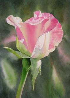 Princess Diana Rose Bud Painting by Sharon Freeman - Princess Diana Rose Bud Fine Art Prints and Posters for Sale Art Floral, Watercolor Rose, Watercolor Paintings, Watercolors, Diana Rose, Rose Art, Botanical Art, Rose Buds, Flower Art