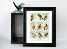 """Vintage or Antique Bird Print """"Songsters And Their Songs"""", taken from an old encyclopedia and framed."""