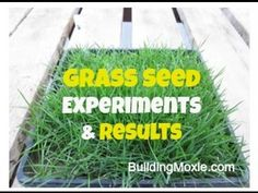 How to Plant Grass Seed :: 5 Basic Steps with a Grass Seed Expert Planting Grass, Growing Grass, Lawn Care Tips, Grass Seed, Garden Tools, Seeds, Knowledge, Plants, Outdoor