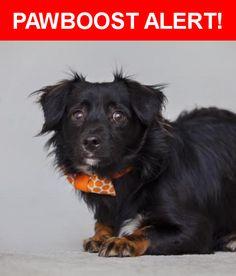 Please spread the word! Petrie was last seen in Los Angeles, CA 90013.    Nearest Address: Near S Spring St & W 5th St