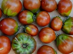 25+ Black Truffle Tomato Seeds, $0.99