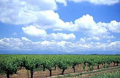 Agriculture, Sacramento Valley - San Joaquin Valley - Vineyards - 20 Miles North Of Fresno - Clean Air With Sierras - Fresno County - Stock Photography and Images from Tom Myers Photography - Sacramento, California