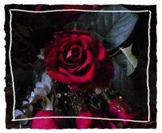 Rosen sind wunderschöne Blumen!