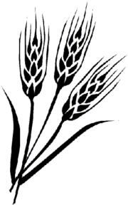 Spanish Wheat Graphic | graphics english click here to return to top graphics spanish