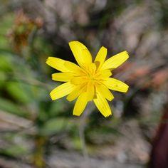 #flower #morningwalk