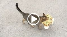 Stealthy Cat Steals His Neighbor's Toy