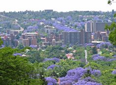 Pretoria - the Jacaranda City South Afrika South Afrika, Port Elizabeth, Pretoria, Beaches In The World, Most Beautiful Beaches, Concrete Jungle, Africa Travel, Capital City, Oh The Places You'll Go