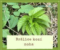 Pesto z bršlice Liver Detox, Herb Garden, Pesto, Gardening Tips, Plant Leaves, Herbs, Plants, Food, Honey