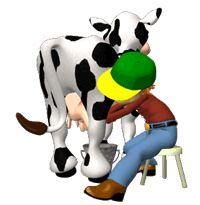 Gifs Animados De Vacas Vacas Lecheras Caricaturas De Animales Vacas