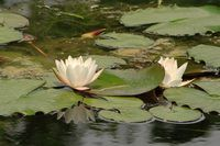 How to Take Care of a Natural Pond (5 Steps)   eHow