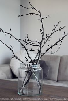There is nothing more beautiful than a simple branch in a glass jar.....
